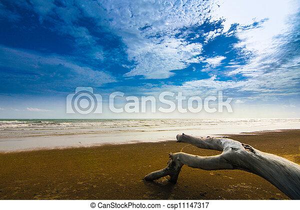 Beach - csp11147317