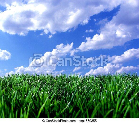 blue sky green grass - csp1880355