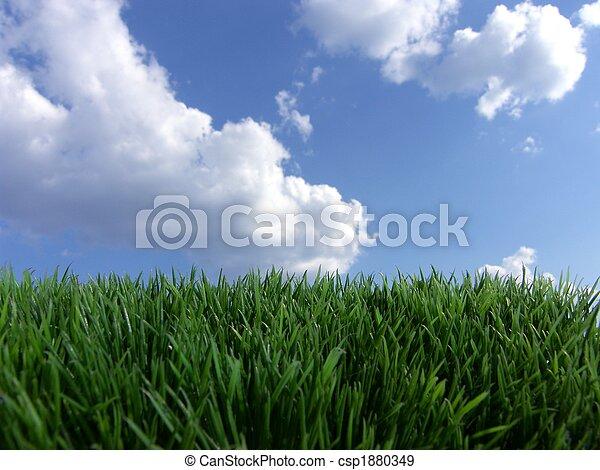 blue sky green grass - csp1880349
