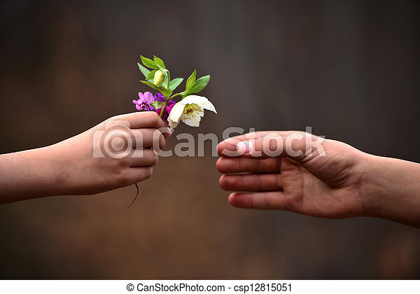 child's hand giving flowers to his father - csp12815051