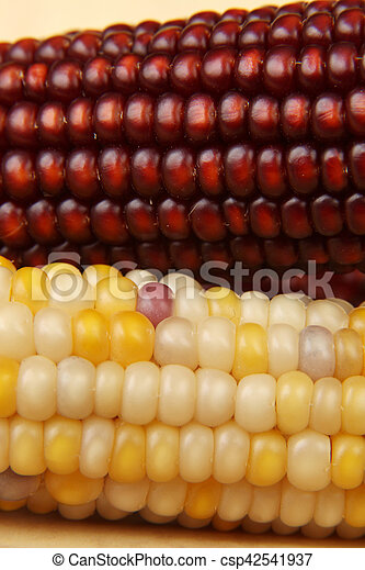 Dried corn - csp42541937