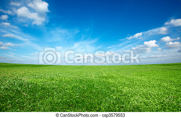 Field of green fresh grass under blue sky - csp3579553
