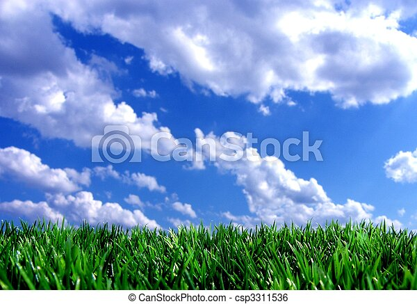 fresh green gras with blue sky - csp3311536
