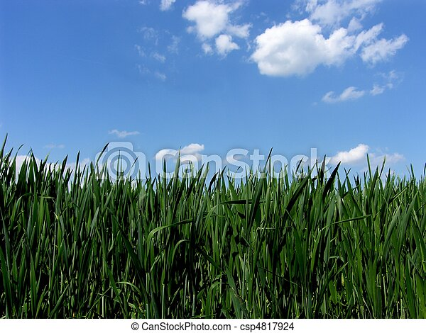 fresh green gras with blue sky - csp4817924
