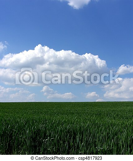 fresh green gras with blue sky - csp4817923