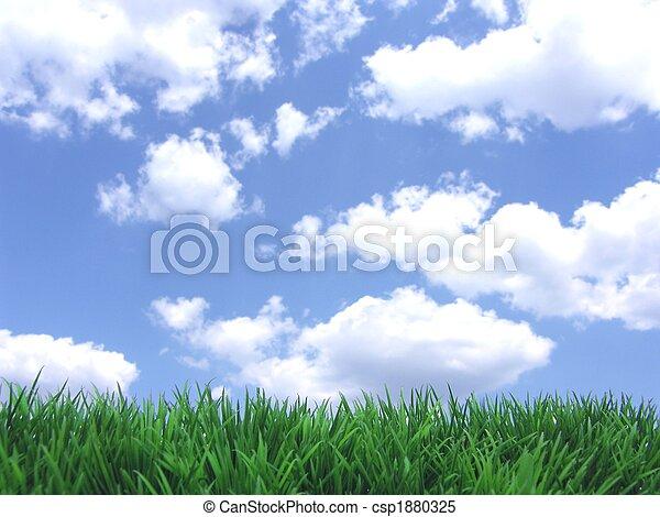 green grass and blue sky - csp1880325