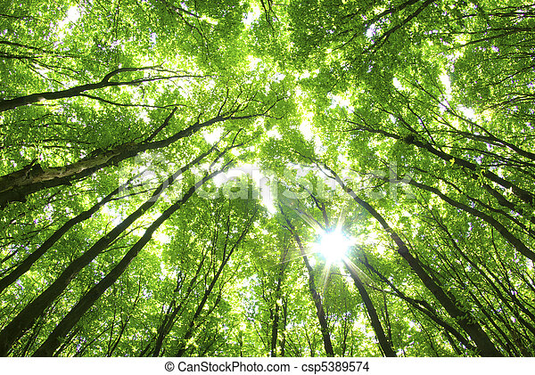 green trees background - csp5389574
