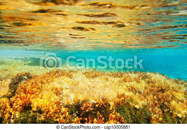 Ibiza Formentera underwater anemone seascape - csp10005881