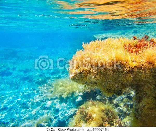 Ibiza Formentera underwater anemone seascape - csp10007464