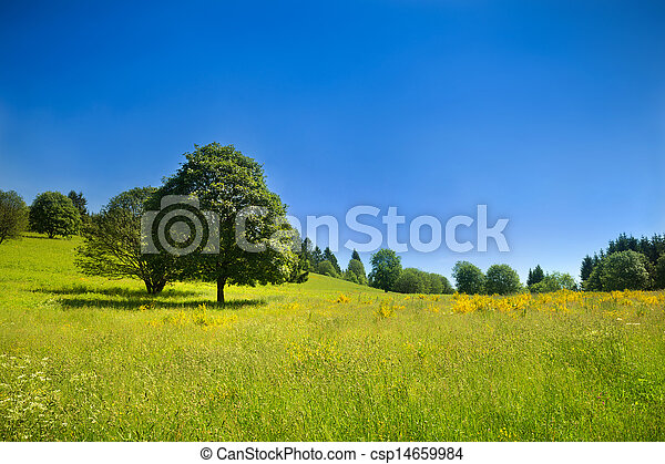 Idyllic rural scenery with green meadow and deep blue sky - csp14659984