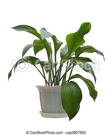 Indoor plant. - csp3907650