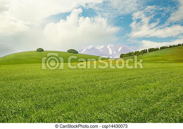 Meadow - csp14430073