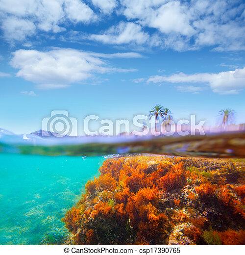 Mediterranean underwater seaweed Denia Alicante spain - csp17390765