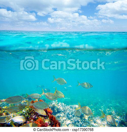 Mediterranean underwater with salema fish school - csp17390768
