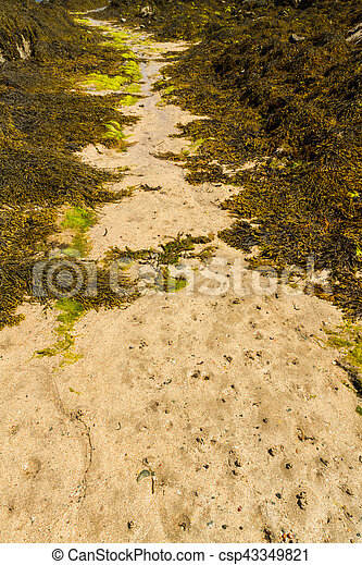 Path through seaweed on beach. - csp43349821