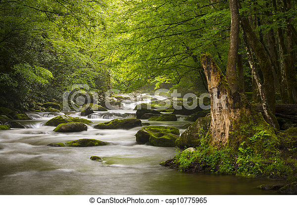 Peaceful Great Smoky Mountains National Park foggy Tremont River relaxing nature landscape scenics near Gatlinburg TN - csp10775965