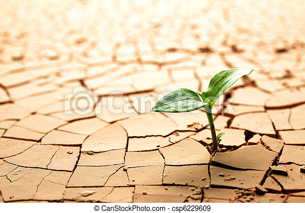 Plant in dried cracked mud - csp6229609