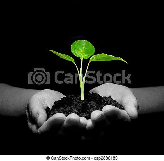 plant in hands - csp2886183