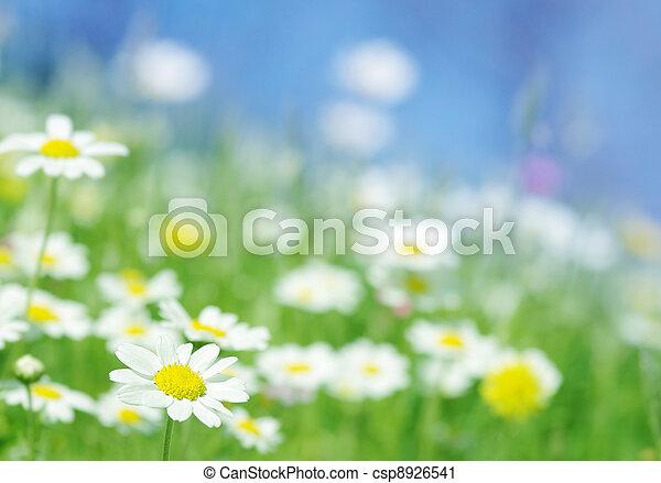 spring flowers - csp8926541
