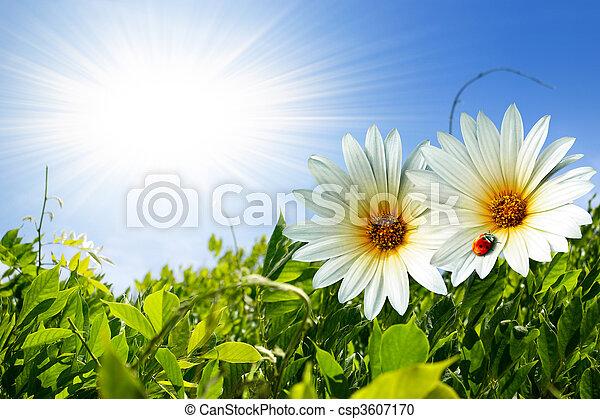 Spring Foliage - csp3607170