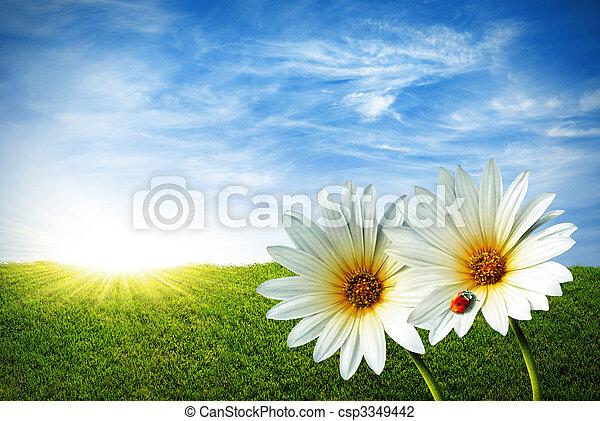 Spring - csp3349442