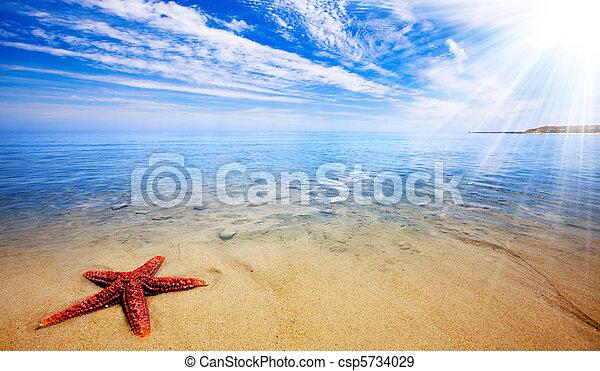 Starfish Paradise - csp5734029