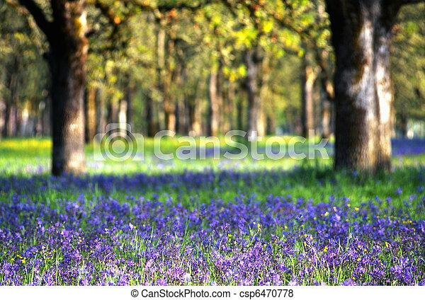 Wildflowers in meadow - csp6470778